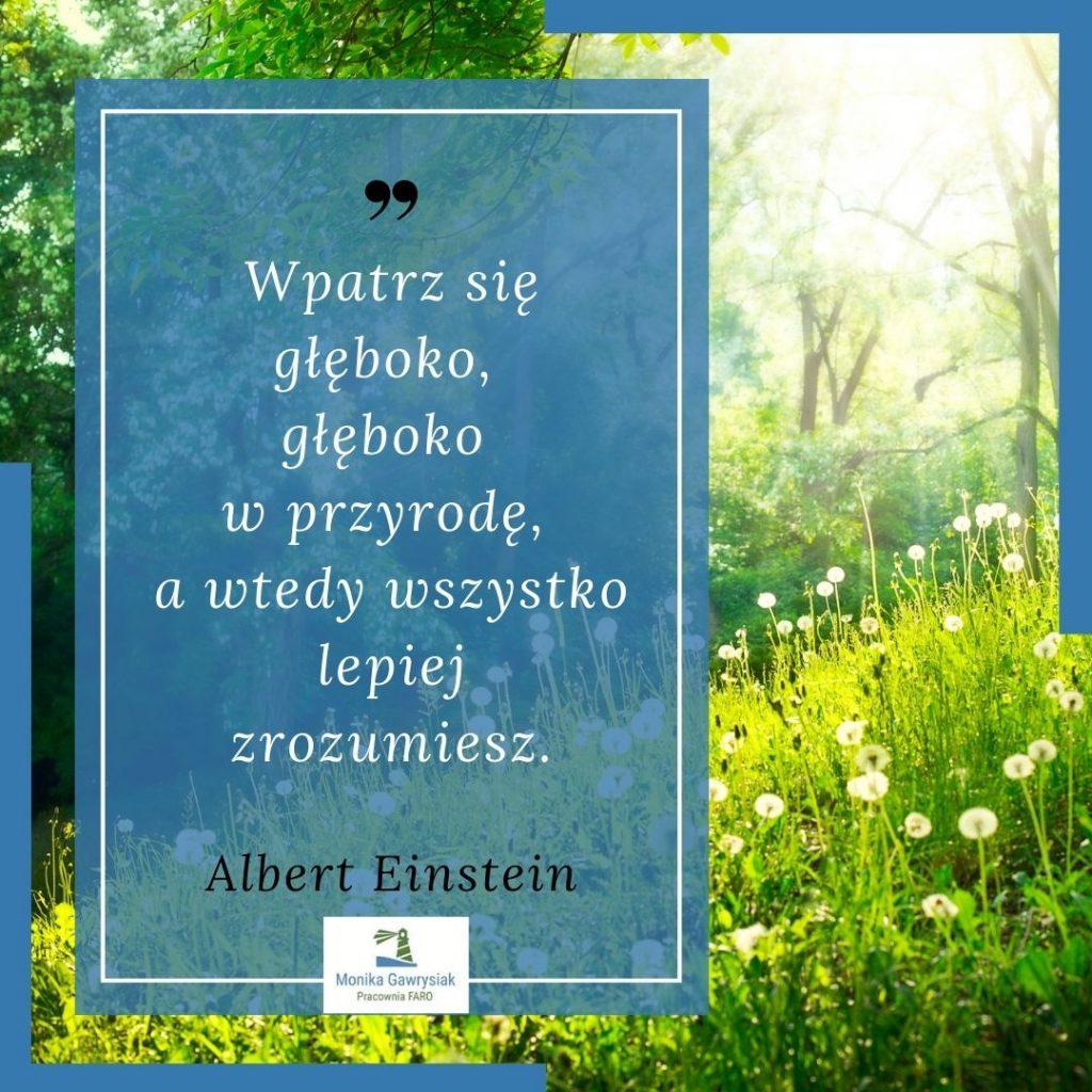 Wpatrz sie gleboko gleboko wprzyrode awtedy wszystko lepiej zrozumiesz Albert Einstein monikagawrysiak.pl  1024x1024 - Co daje nam kontakt znaturą?